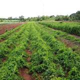 Finca Agropecuaria, 14 Has, Quebrada Con Agua Viva, $150000